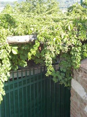 A great trattoria & the Cinque Terre