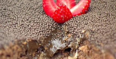 anamariabraga bolo de chocolate