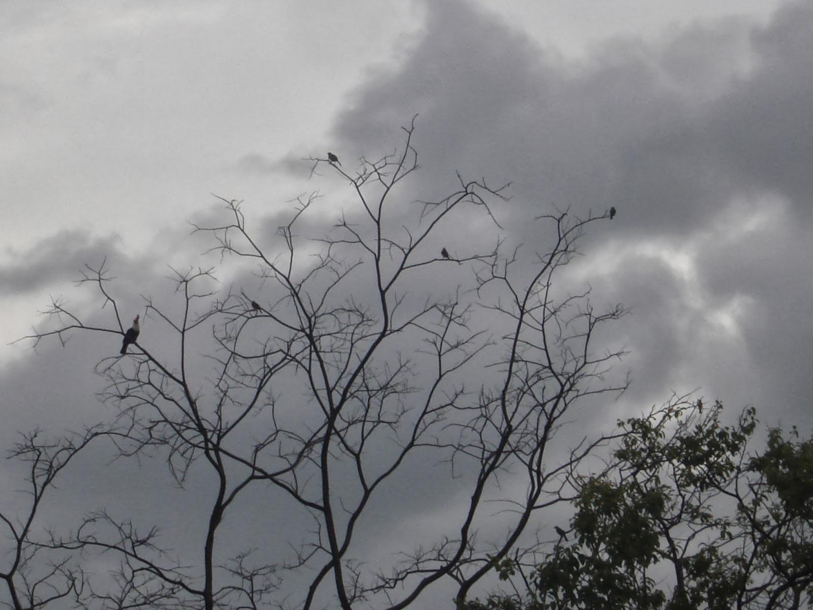 Encantos da natureza: casal de tucanos livres, pertinho do meu apartamento, em Brasília!