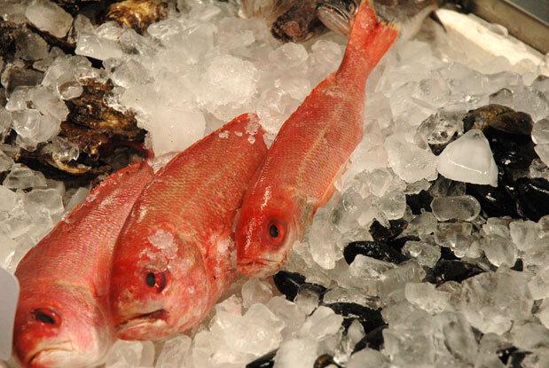 Dica de Verão - Como comprar um bom peixe