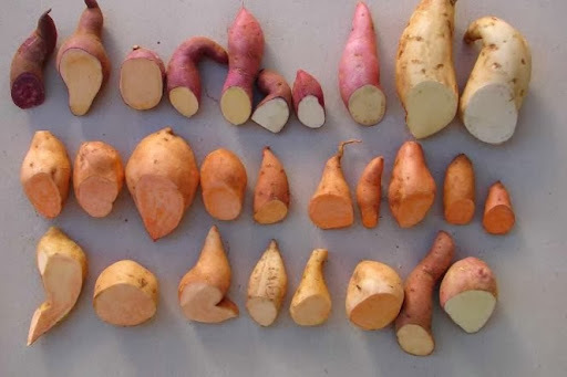 Os Benefícios da Batata Doce! É batata, é doce, mas emagrece. Vale a pena apostar no alimento! leia !