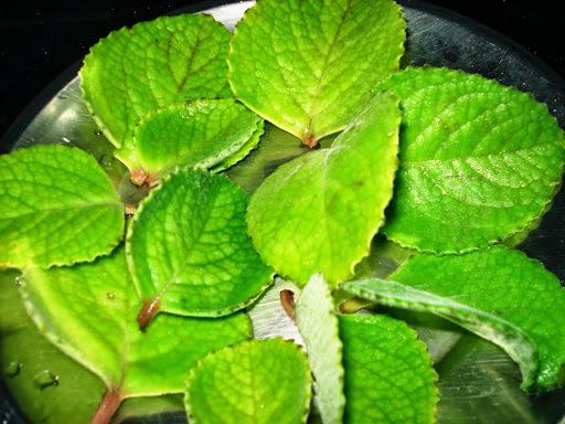 Dodda Patre (Sambar Balli) Leaf Bajji.