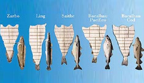 peixe salgado tipo bacalhau