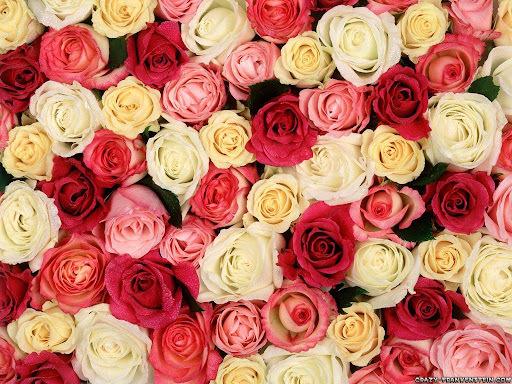 Em nome da rosa
