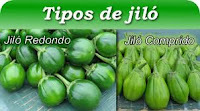 salada de jiló cozido crocante