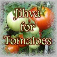 Tomato Chapathis