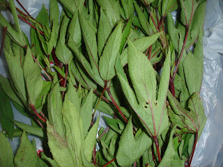 Gongura Pachadhi and the award