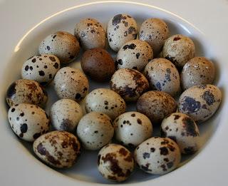 quail scotch eggs