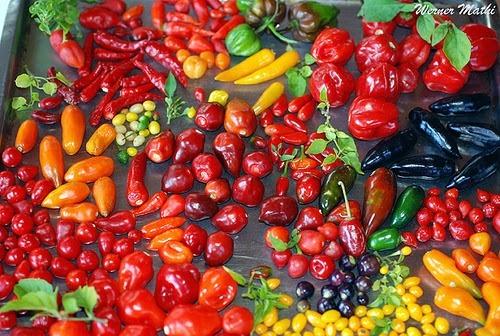 como curtir pimenta