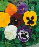 Do Jardim para a Mesa: Flores Comestíveis