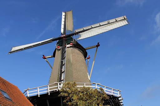 Risoto com Toque Holandês: Cogumelos, Vinhos Tinto e Queijo Gouda