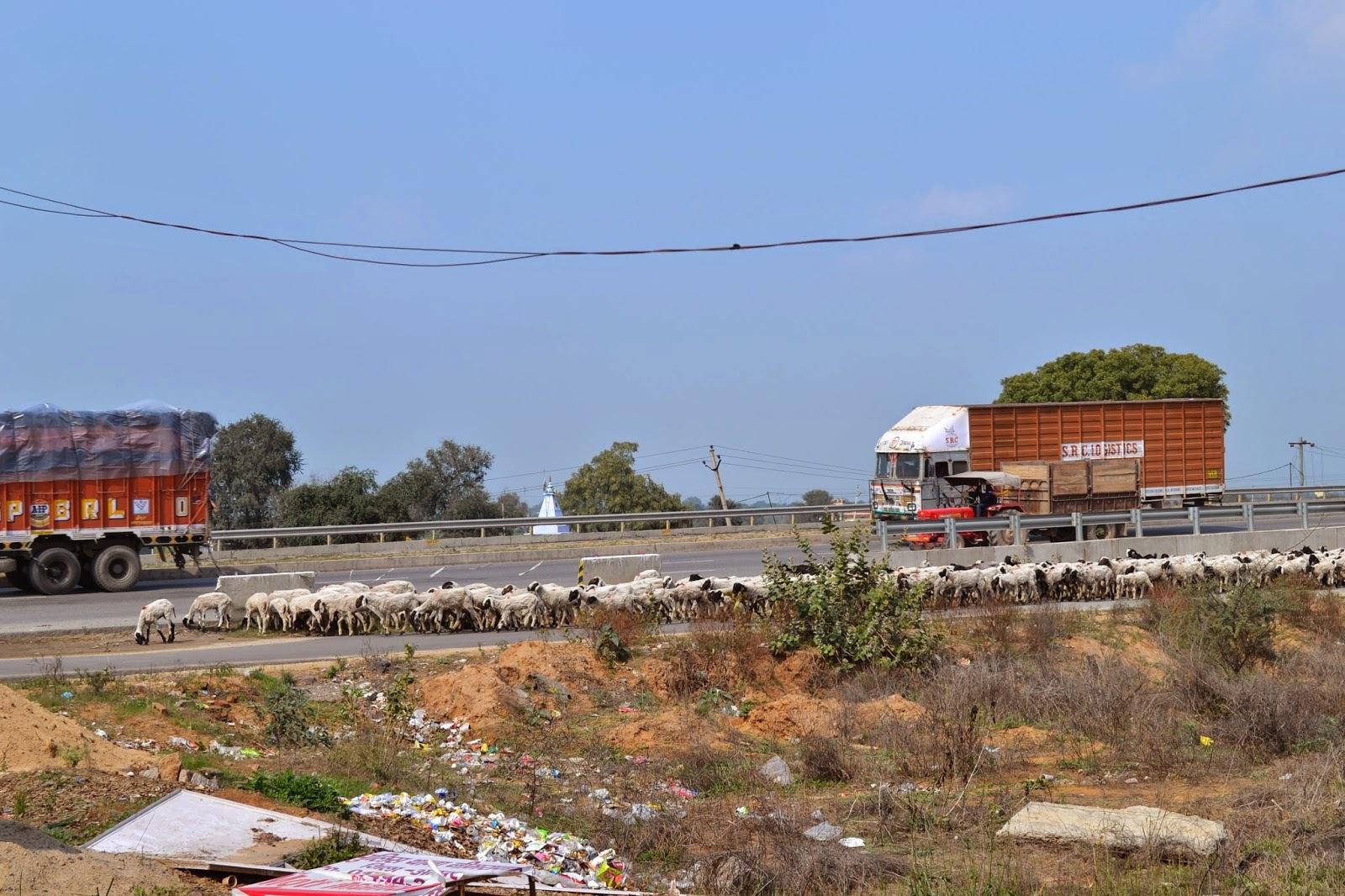 Ako som cestovala  po Indii alebo India mojimi ocami - 2. cast Jaipur ( Pink city-Ruzove mesto)