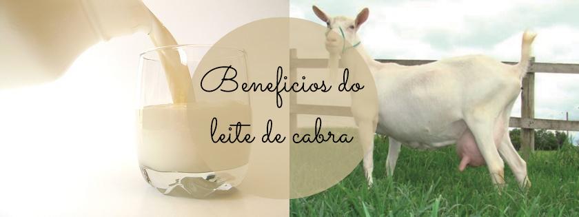 Dica de saúde: Conheça os benefícios do leite de cabra