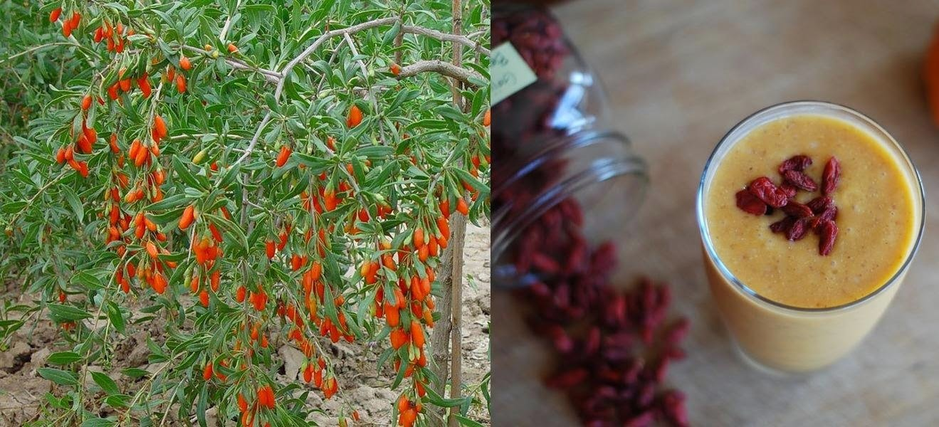 Goji Berry - Superalimento
