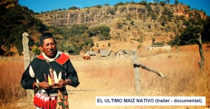 EL ULTIMO MAÍZ NATIVO (trailer - documental).