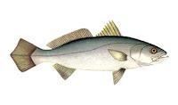 de posta de pescada amarela no forno