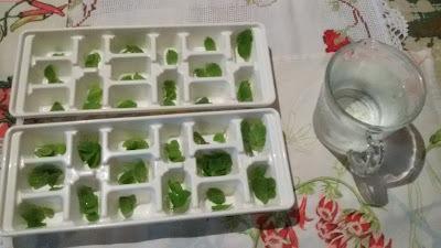 Como conservar hortelã fresca.