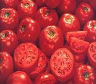 Acelga e Tomates