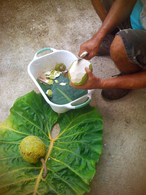 First recipe from Niue: Breadfruit Chips
