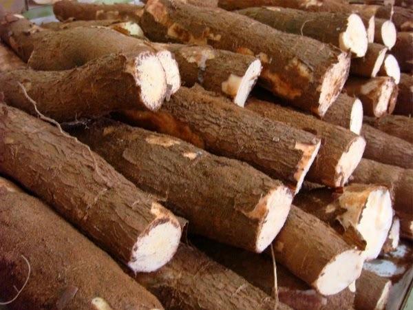bolo de aipim mandioquinha macaxeira ou mandioca