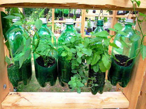Como fazer em casa uma horta com temperos frescos
