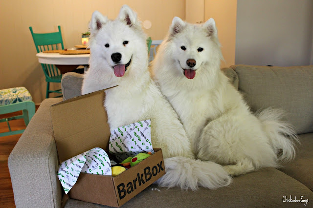 Samoyed Sundays: May BarkBox Unboxing