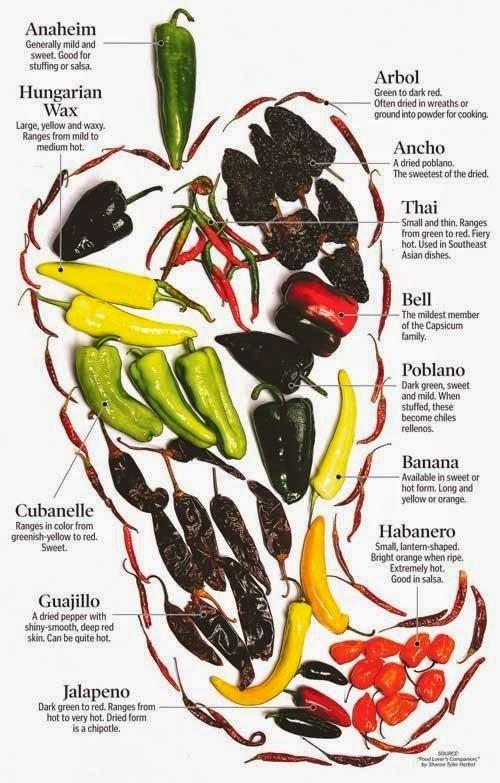 Chilli a jiné papričky I.