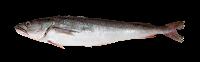 peixe merluza inteiro assado