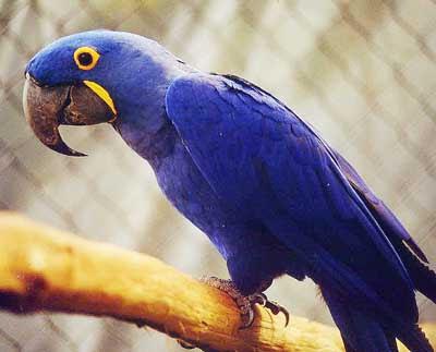 Blogagem Coletiva - Hoje é dia do Azul