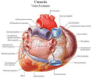 26 de setembro - Dia mundial do Coração