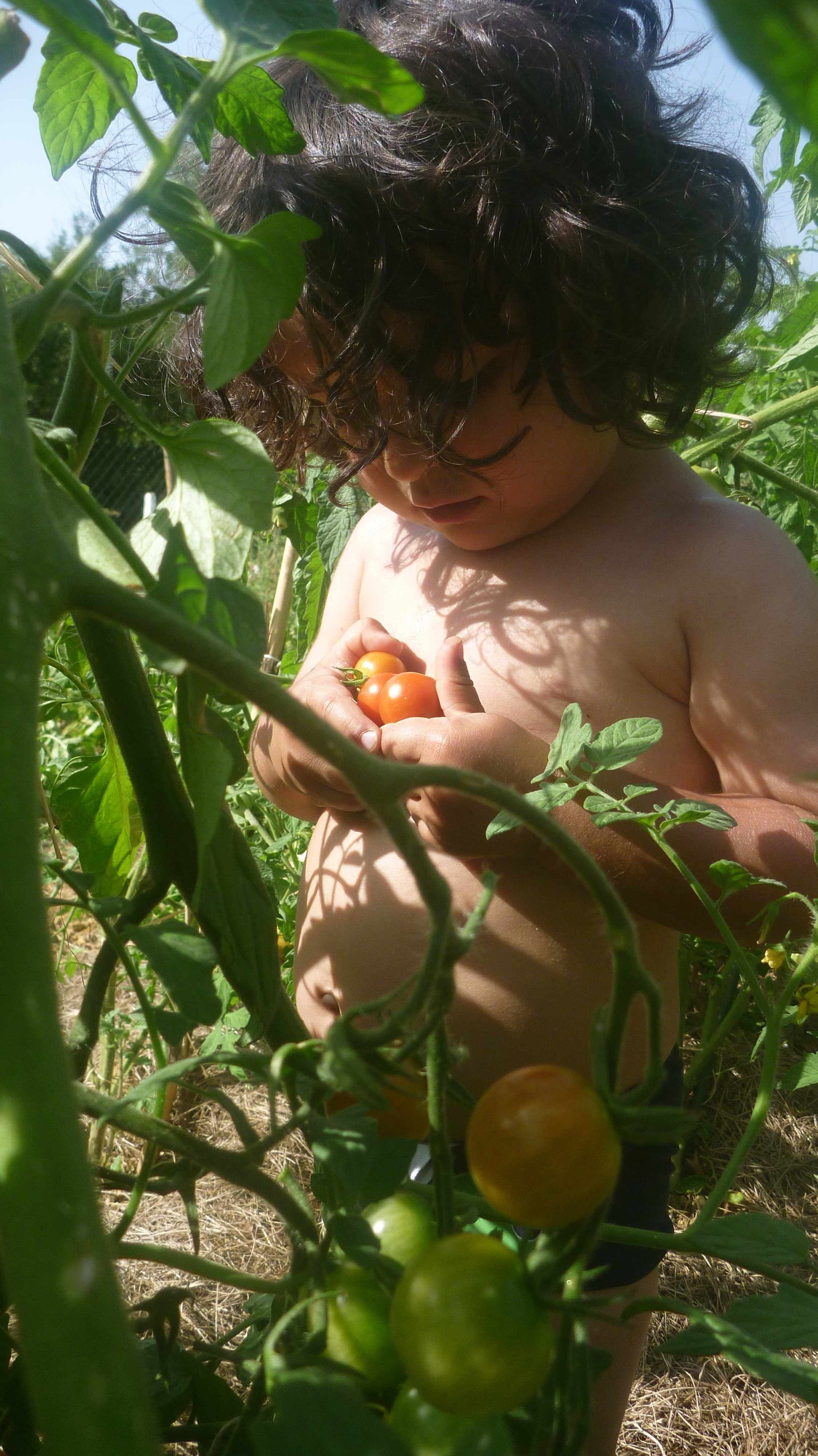 A blog (and tomato) holiday!