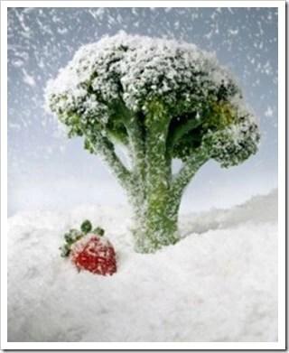 Facilitando a Rotina : Congelando Alimentos