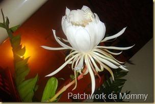 Rainha-da-noite, uma flor exótica e bela