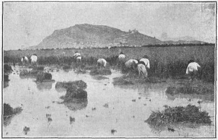 La Verdadera Historia de La Laguna del Náinari
