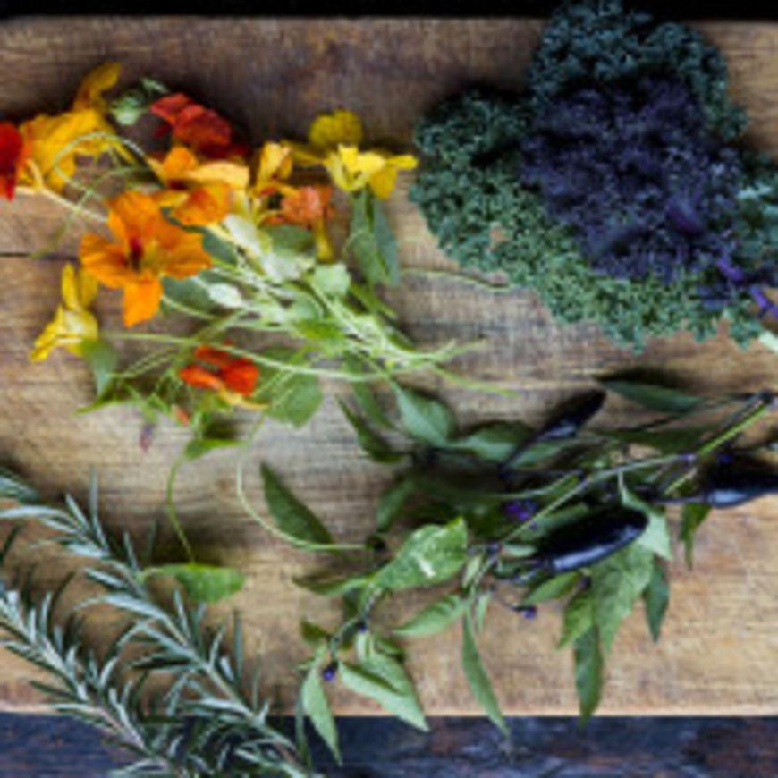 Lidové léčení jednotlivých nemocí – recepty