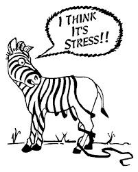 Hmm, findes der stressdæmpende mad?
