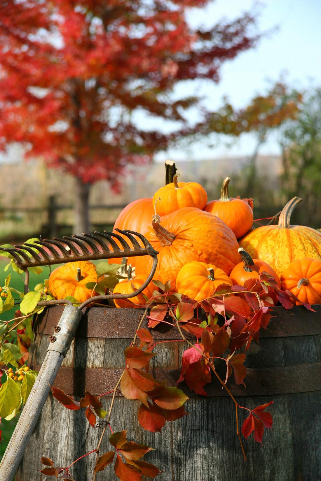 Good Things favourites - Thanksgiving
