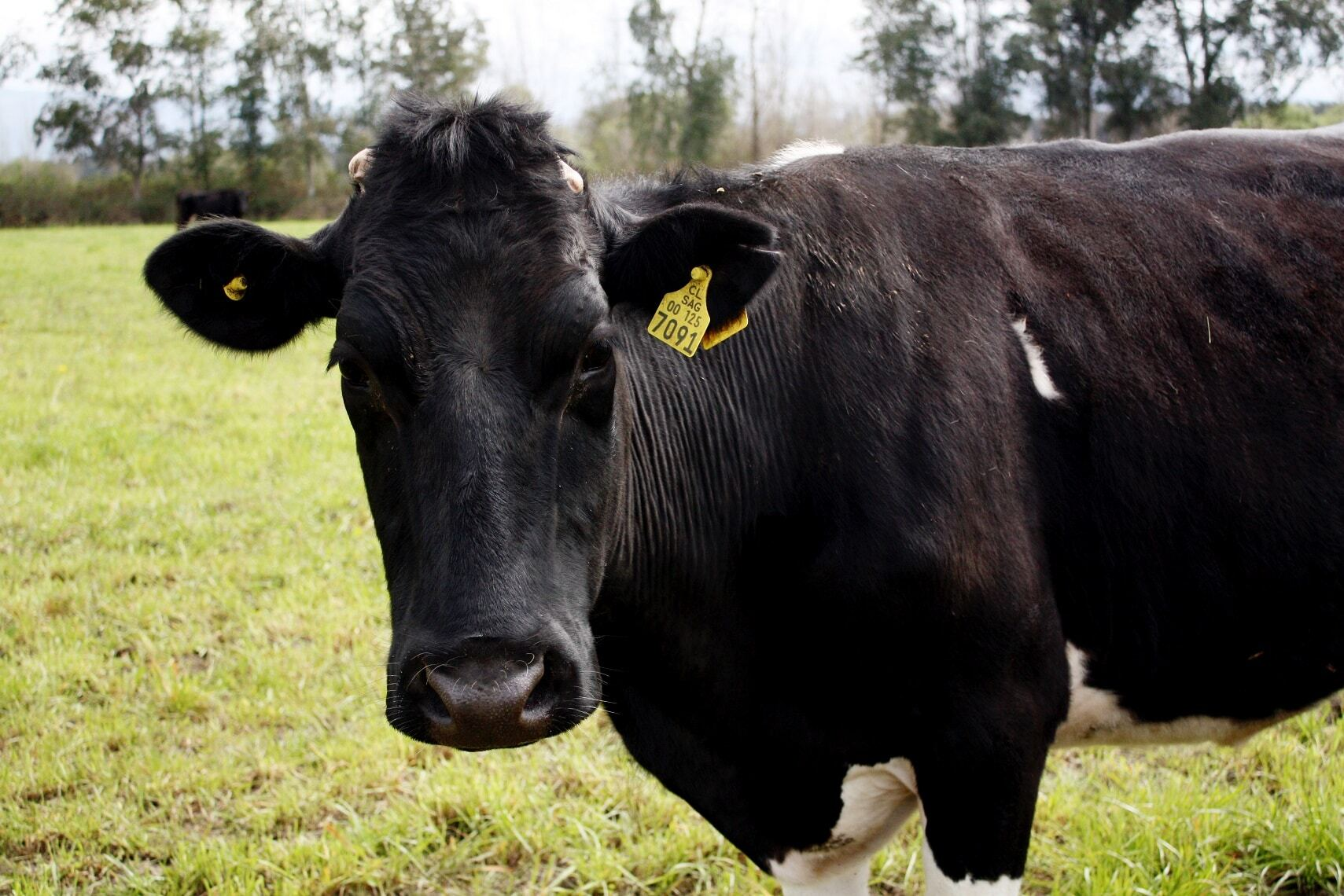 Lácteos Malleco: Producción Natural en La Araucanía