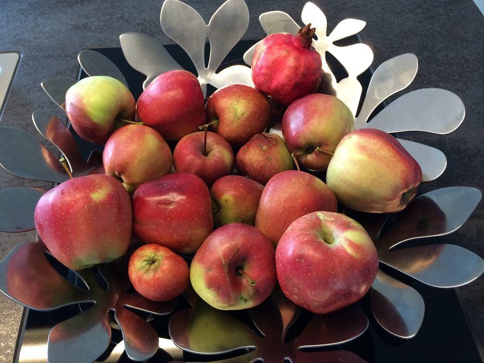 19. September: Der Tag des Apfels