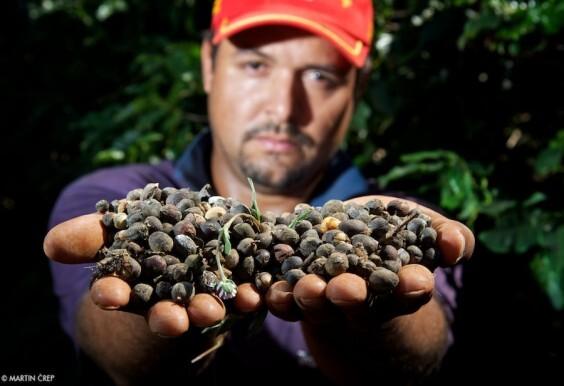 Nečakané odhalenia a život na farme v Brazílii