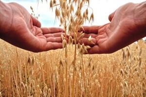 Die 6 besten Gründe um Bohnen, Linsen & Co zu genießen