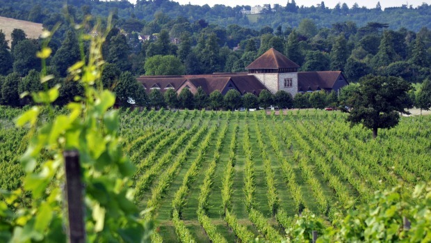 The best places to go wine tasting in the UK