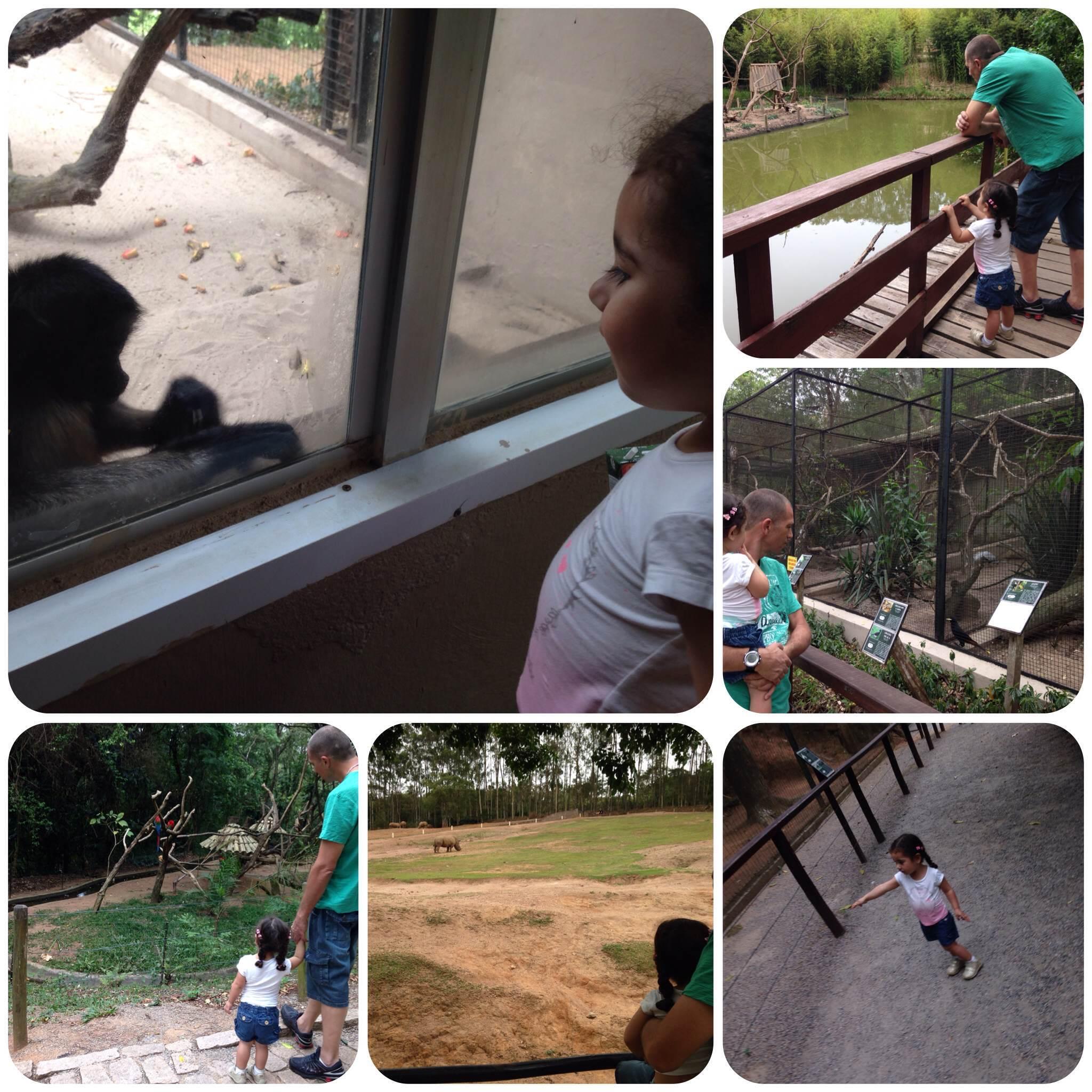 ZooParque: Zoológico em Itatiba, passeio pra toda família