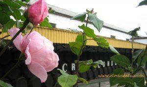 Visita a las Bodegas Cruz Conde