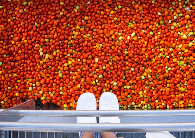 SPAIN: the farm to fork journey of a Knorr tomato