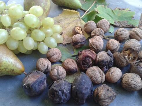 Magret de canard poêlé aux raisins et aux poires, sauce au miel