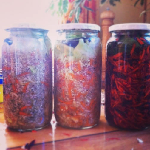 Zanahorias Fermentadas con Jengibre