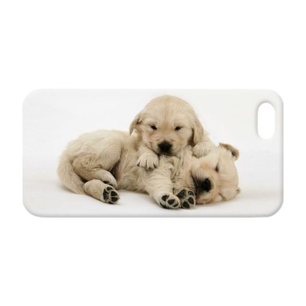 Golden retriever valpar iphone 5c skal