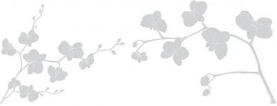Fönsterfilm - orkidé 100cm x 33cm