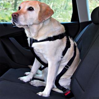 Trixie bilteppe + Trixie sikkerhetsbelte for hund - Beltestr M + bilteppe